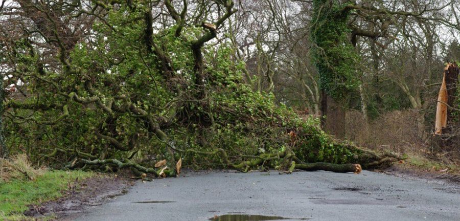 Pictures: Numerous trees down and flooding in Timperley as Storm Doris lashes Altrincham