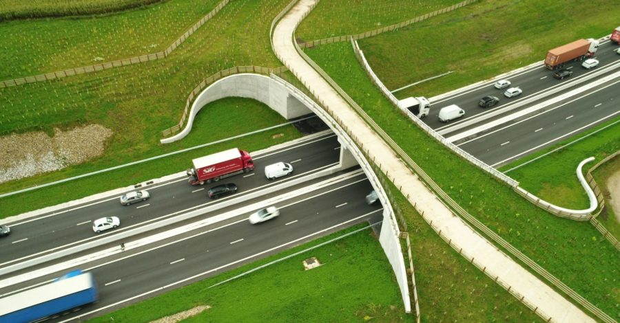 How the innovative A556 green bridge has bloomed just 10 months since completion