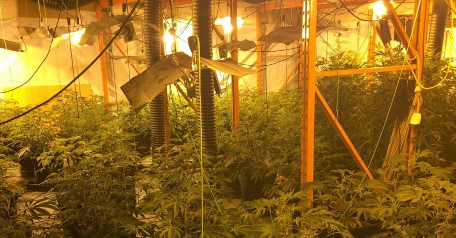 Police uncover cannabis farm in Timperley