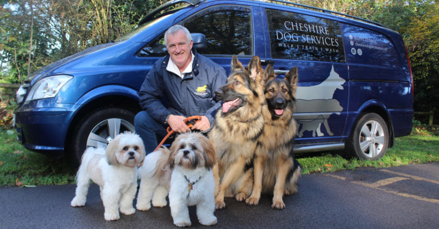 """Many get the wrong dog for their lifestyle"": Former Hale estate agent launches dog training and walking business"
