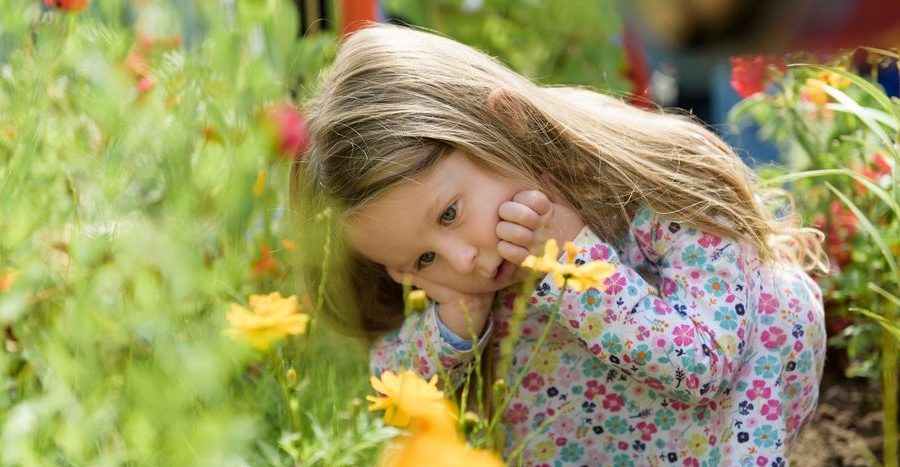 Kids go free at the RHS Flower Show at Tatton Park – here's how to make the best of your family day out